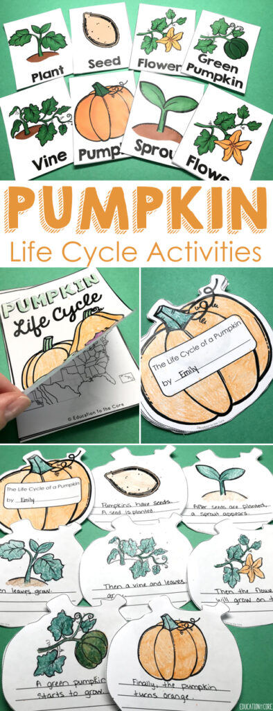 Integrate Science, Literacy and Writing by reading about the Pumpkin Life Cycle.  This unit includes vocabulary activities, graphic organizers, an interactive pumpkin book, and a mini book.  I have also included two Interactive Notebook Pieces and a Number Bond Math Activity.