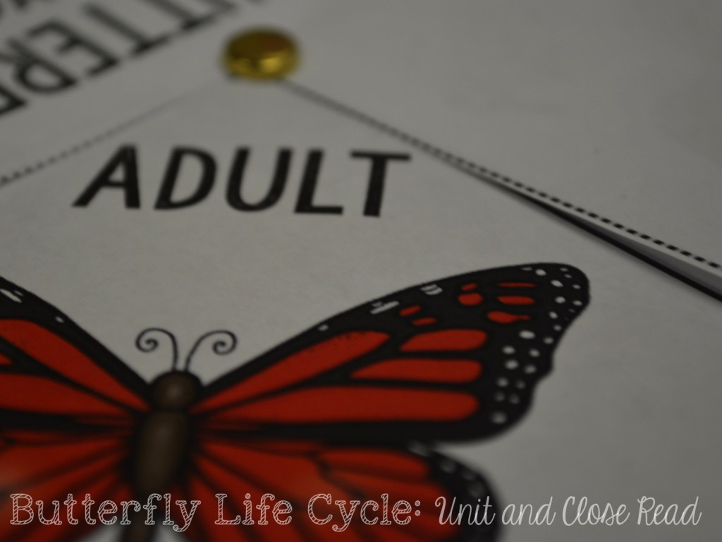 Butterfly Life Cycle Unit and Freebie