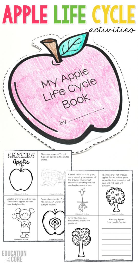 Printables and close read for learning about the life cycle of an apple! Includes engaging math, literacy, and science activities for kindergarten and first grade students!