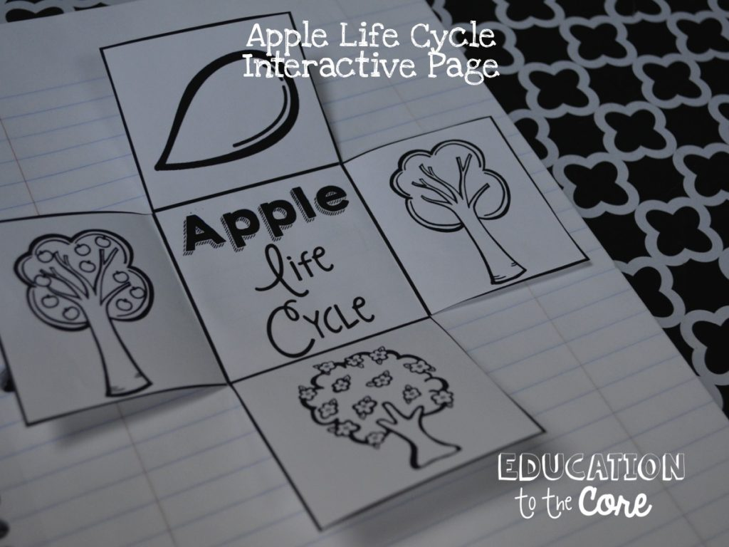 """Interactive Apple Life Cycle Notebook Pages: I just had to save the best for last! My favorite part! Interactive Journal Pages! My kids were beyond excited and so engaged in this activity. I have one for the apple life cycle, one for a """"recipe"""" and one for apple vocabulary."""