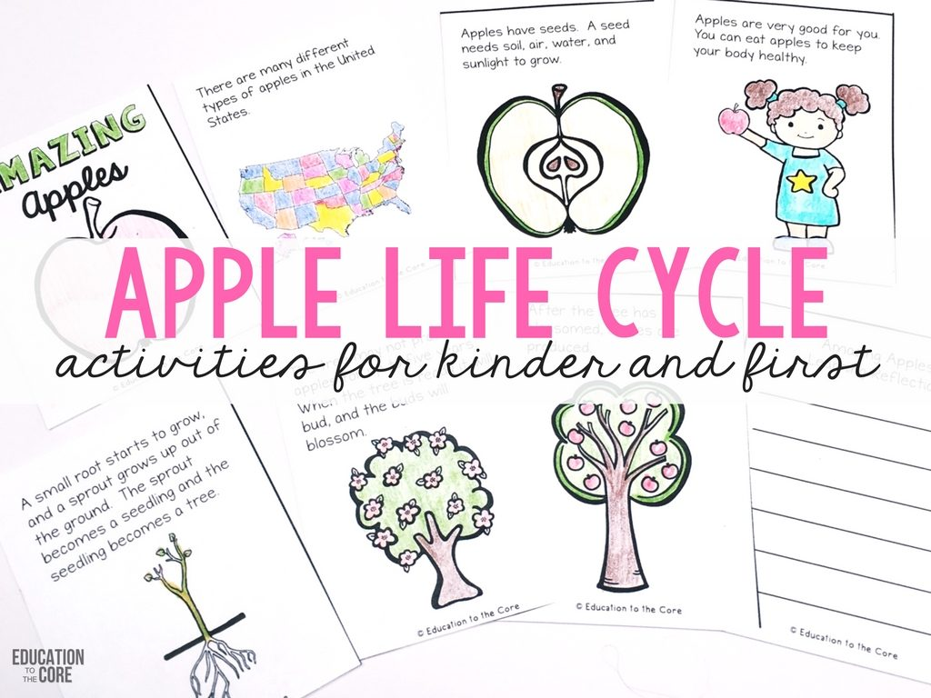 Apple Life Cycle Activities for Kinder and First