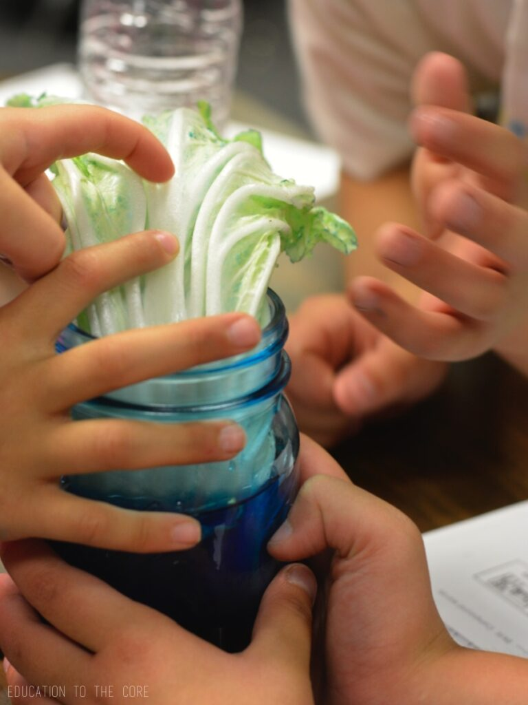 How Plants Absorb Water Experiment