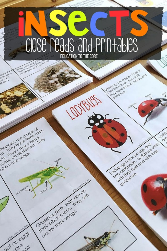Ants: A FREE Mini-Book and Comprehension Printables