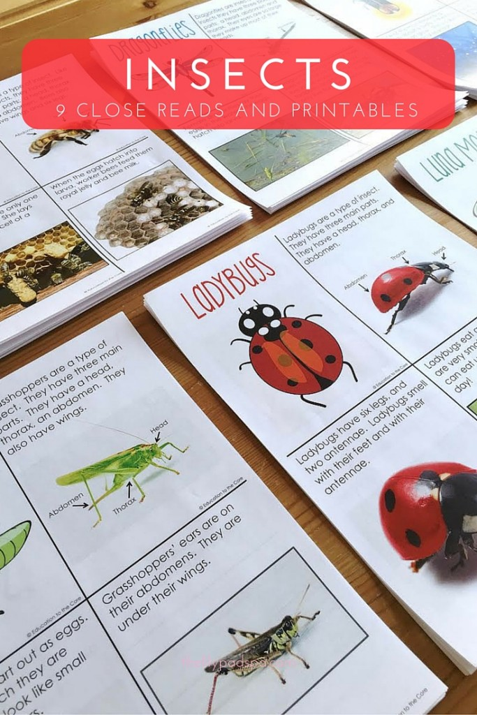 Nine Insects Close Reads!